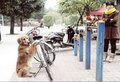 Auto-fiets-&-reizen