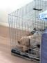 Puppyrennen-&-Benches