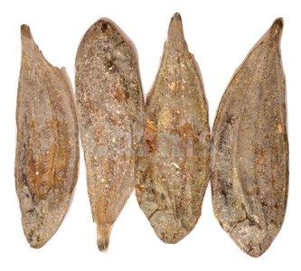 Carnis Platvis 150 gram