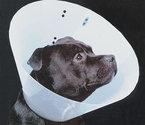 Hondenkraag-Smart-Collar